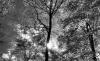 Wald Frühling Sonne